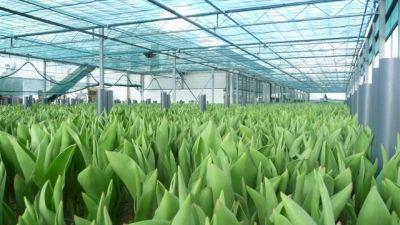 9 - landbouw