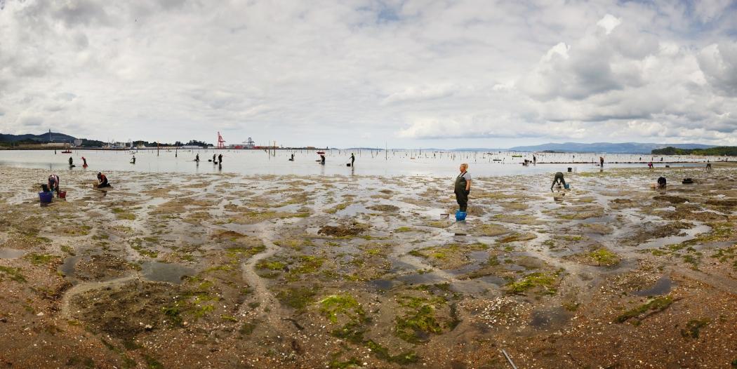 Ellenkooi carril-vissers srgb Ellen Kooi